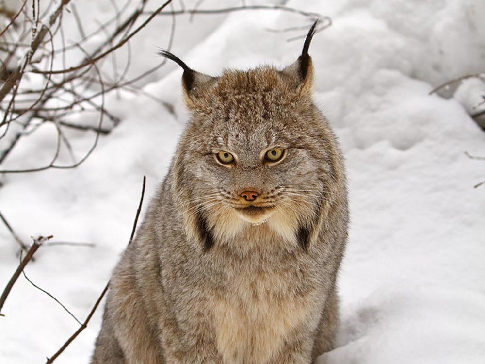 wildlife-15